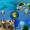 SERATA TEMATICA: L'acquacoltura e le sue applicazioni in acquariofilia Domenica 18 Dicembre 2011