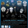 Occhio alle meduse (Watch for Jellies)!!!