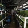 Il mercato dei pesci tropicali: ci sono segnali di ripresa?