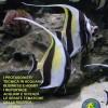 Annuario G.A.S. 2012