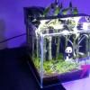 Aquariofila due mari 2013 – reportage della mostra