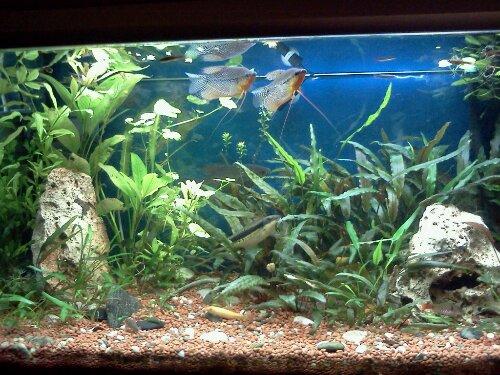 L acquario asiatico di alessandro crudo g a s for Vasca pesci esterno