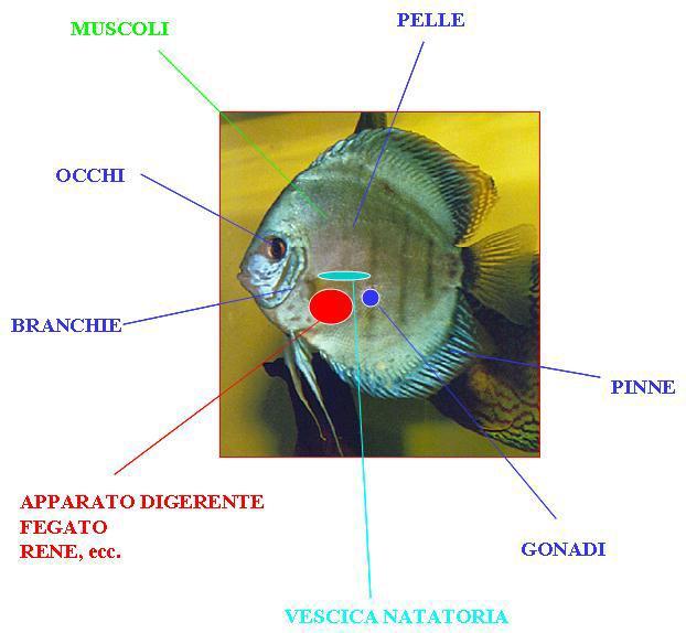 Come usare blu di metilene acquario for Blu di metilene acquario